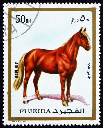 fujeira: FUJEIRA - CIRCA 1972: a stamp printed in the Fujeira shows Horse, Equus Ferus Cabalus, Domestic Animal, circa 1972 Editorial