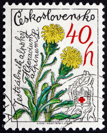 hawkweed: CZECHOSLOVAKIA - CIRCA 1979: a stamp printed in the Czechoslovakia shows Hawkweed, Hieracium Alpinum, Mountain Flower, circa 1979 Editorial