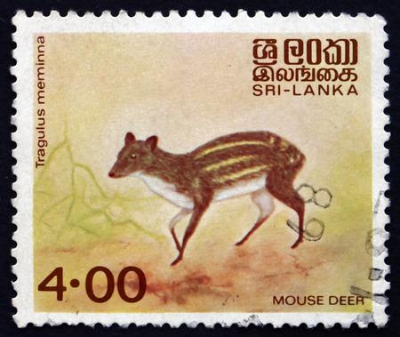 sri lankan: SRI LANKA - CIRCA 1982: a stamp printed in Sri Lanka shows Mouse Deer, Tragulus Meminna, Sri Lankan Spotted Chevrotain, circa 1982