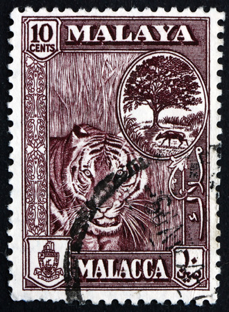 malaya: MALAYA - CIRCA 1960: a stamp printed in Malaya shows Tiger with Melaka Tree and Mouse Deer, circa 1960 Editorial