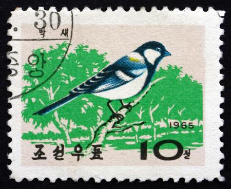 passerine: COREA DEL NORD - CIRCA 1965: un francobollo stampato in Corea del Nord mostra Corea Cinciallegra, Parus Major, � uccello passeriforme, circa 1965 Editoriali
