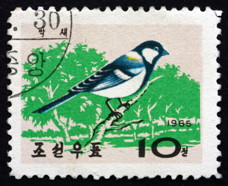 passerine: NORTH KOREA - CIRCA 1965: a stamp printed in North Korea shows Korean Great Tit, Parus Major, is Passerine Bird, circa 1965
