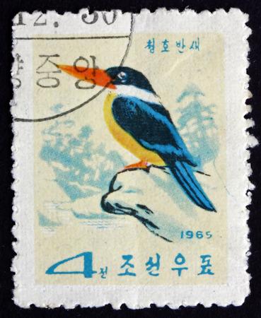 NORTH KOREA - CIRCA 1965: a stamp printed in North Korea shows Black-caped Kingfisher, Halcyon Pileata, is a Tree Kingfisher, Bird, circa 1965 Editorial