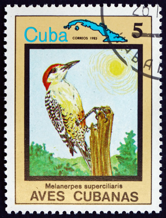indian postal stamp: CUBA - CIRCA 1983: a stamp printed in the Cuba shows West Indian Woodpecker, Melanerpes Superciliaris, Bird, circa 1983