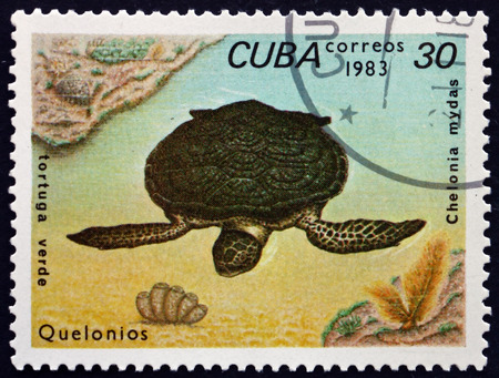 chelonia: CUBA - CIRCA 1983: a stamp printed in the Cuba shows Green Sea Turtle, Chelonia Mydas, is a Large Sea Turtle of the Family Cheloniidae, circa 1983 Editorial