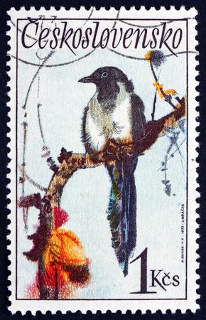 pica: CZECHOSLOVAKIA - CIRCA 1972: a stamp printed in the Czechoslovakia shows Black-billed Magpie, Pica Hudsonia, Bird, circa 1972