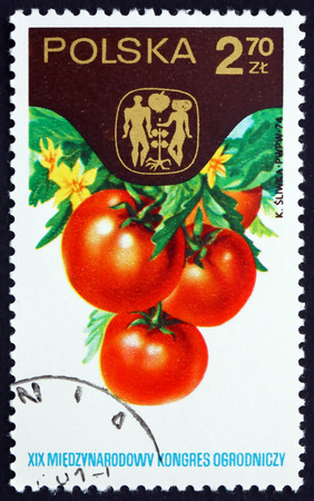 horticultural: POLAND - CIRCA 1974: a stamp printed in the Poland shows Tomatoes, 19th Horticultural Congress, Warsaw, circa 1974