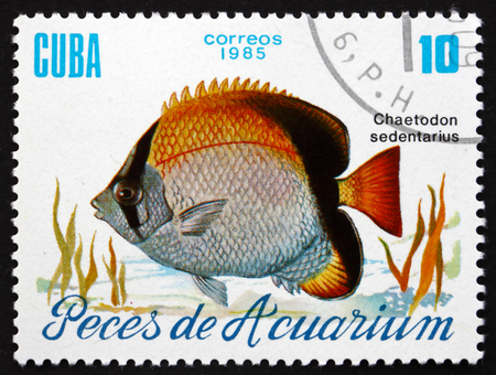 butterflyfish: CUBA - CIRCA 1985: a stamp printed in the Cuba shows Reef Butterflyfish, Chaetodon Sedentarius, Aquarium Fish, circa 1985