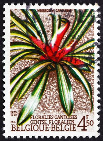 neoregelia: BELGIUM - CIRCA 1975: a stamp printed in the Belgium shows Brushing Bromeliad, Neoregelia Carolinae, Ghent International Flower Exhibition, circa 1975