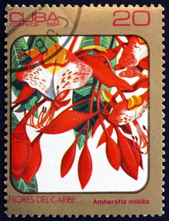 tropical tree: CUBA - CIRCA 1984: a stamp printed in the Cuba shows Pride of Burma, Amherstia Nobilis, Tropical Tree with Large, Showy Flowers, circa 1984 Editorial