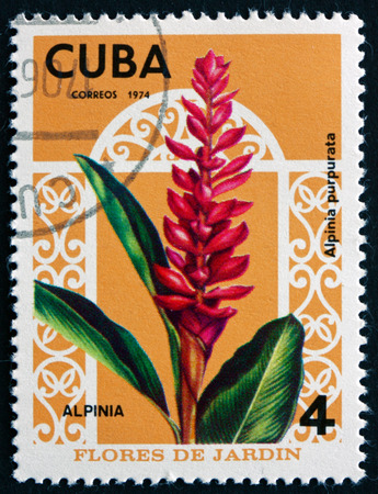 flowering plant: CUBA - CIRCA 1974: a stamp printed in the Cuba shows Red Ginger, Alpinia Purpurata, Flowering Plant, circa 1974