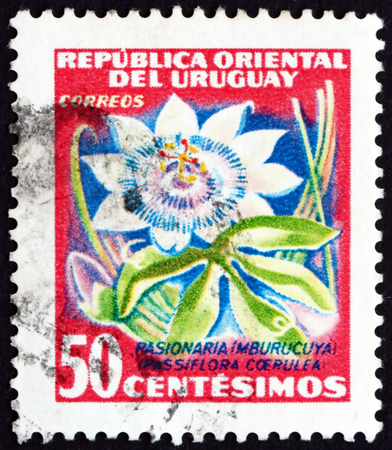 passion flower: URUGUAY - CIRCA 1954: a stamp printed in the Uruguay shows Passion Flower, Passiflora, Flowering Plant, circa 1954