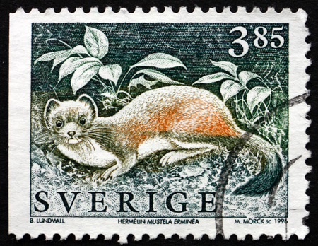 stoat: SWEDEN - CIRCA 1996: a stamp printed in the Sweden shows the Stoat, Mustela Erminea, Wild Animal, circa 1996