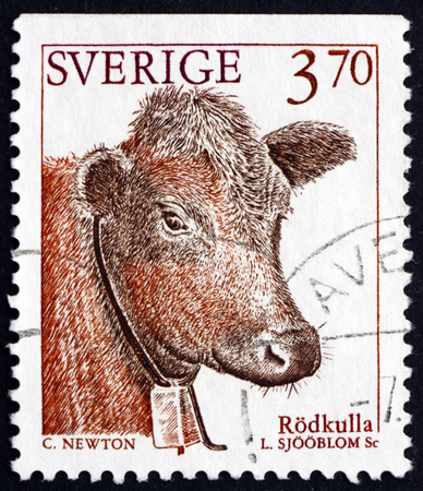 domestic animal: SWEDEN - CIRCA 1995: a stamp printed in the Sweden shows Red Polled Cattle, Domestic Animal, circa 1995
