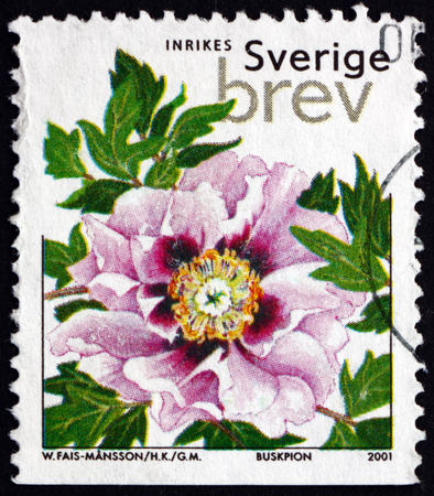tree peony: SWEDEN - CIRCA 2001: a stamp printed in the Sweden shows Tree Peony, Paeonia Suffruticosa, Flowering Plant, circa 2001 Editorial