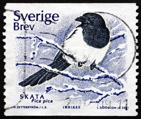 pica: SWEDEN - CIRCA 2001: a stamp printed in the Sweden shows European Magpie, Pica Pica, Bird, circa 2001