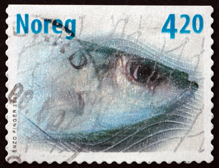 forage fish: NORWAY - CIRCA 2000: a stamp printed in the Norway shows Atlantic Herring in a Fishing Net, Clupea Harengus, Forage Fish, circa 2000
