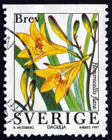 flowering plant: SWEDEN - CIRCA 1997: a stamp printed in the Sweden shows Lemon Daylily, Hemerocallis Flava, Flowering Plant, circa 1997