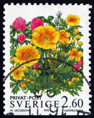 flowering plant: SWEDEN - CIRCA 1993: a stamp printed in the Sweden shows Buttercup, Ranunculus, Flowering Plant, circa 1993 Editoriali