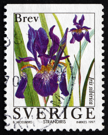 post stamp: SWEDEN - CIRCA 1997: a stamp printed in the Sweden shows Iris, Iris Sibirica, Flowering Plant, circa 1997