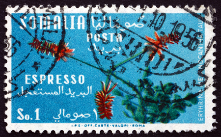 erythrina: SOMALIA - CIRCA 1955: a stamp printed in the Somalia shows Erythrina Melanacantha, Plant, circa 1955