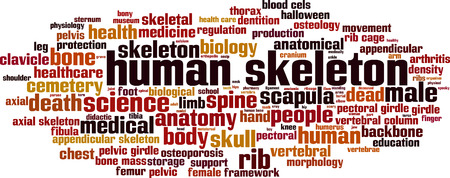 mass storage: Human skeleton word cloud concept. Vector illustration