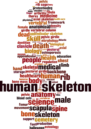 pelvic: Human skeleton word cloud concept. Vector illustration