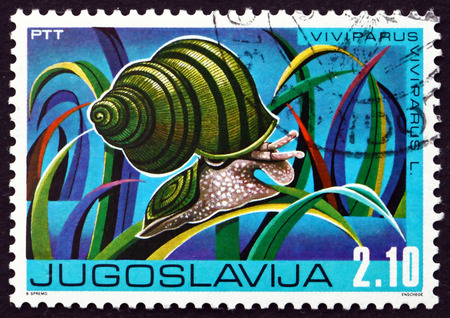 freshwater snails: YUGOSLAVIA - CIRCA 1976: a stamp printed in the Yugoslavia shows Winkle, Viviparus Viviparus, Freshwater Snail, circa 1976
