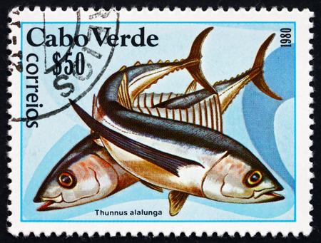 longfin: CAPE VERDE - CIRCA 1980: a stamp printed in the Cape Verde shows Albacore, Thunnus Alalunga, Species of Tuna Fish, circa 1980