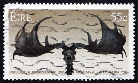 natural history museum: IRELAND - CIRCA 2007: a stamp printed in the Ireland shows Horns, 150th Anniversary of Natural History Museum, Dublin, circa 2007