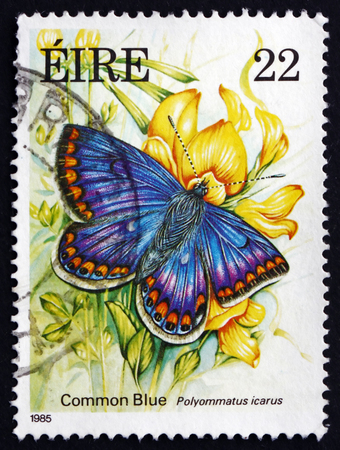 icarus: IRELAND - CIRCA 1985: A stamp printed in Ireland shows Common Blue, Polyommatus Icarus, Butterfly, circa 1985