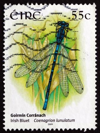 bluet: IRELAND - CIRCA 2009: A stamp printed in Ireland shows Irish Damselfly, Coenagrion Lunulatum, Insect, circa 2009