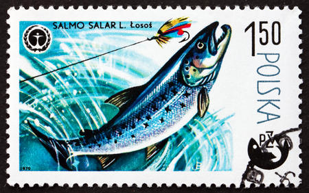 salmo: POLAND - CIRCA 1979: a stamp printed in Poland shows Atlantic Salmon, Salmo Salar, is a Species of Fish, circa 1979 Editorial