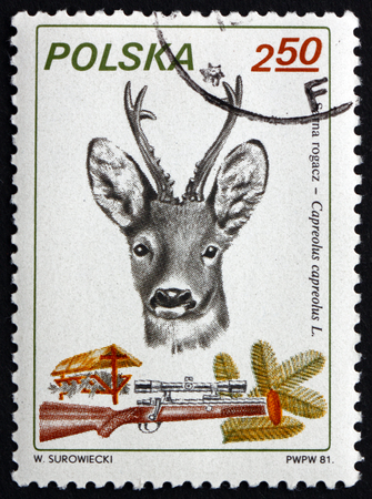 postage stamps: POLAND - CIRCA 1981: a stamp printed in Poland shows European Roe Deer, Capreolus Capreolus, is Eurasian Species of Deer, circa 1981 Editorial