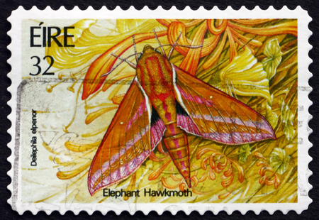 deilephila: IRELAND - CIRCA 1994: A stamp printed in Ireland shows Elephant Hawkmoth, Deilephila Elpenor, Insect, circa 1994 Editorial