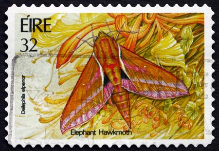 IRELAND - CIRCA 1994: A stamp printed in Ireland shows Elephant Hawkmoth, Deilephila Elpenor, Insect, circa 1994 Editorial