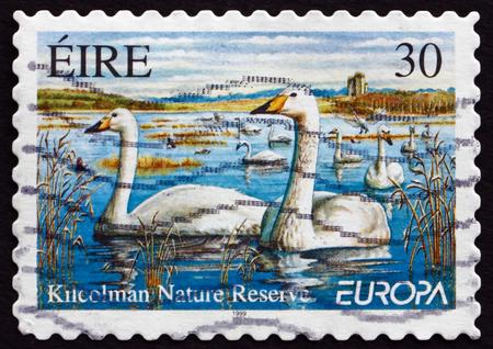 whooping: IRELAND - CIRCA 1999: A stamp printed in Ireland shows Whooping Swans, Cygnus Cygnus, Kilcolman Nature Reserve, circa 1999 Editorial