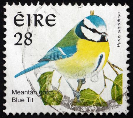 cyanistes: IRELAND - CIRCA 1997: a stamp printed in Ireland shows Blue Tit, Cyanistes Caeruleus, is a small Passerine Bird, circa 1997