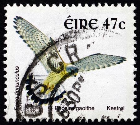 falco: IRELAND - CIRCA 2002: a stamp printed in Ireland shows Kestrel, Falco Tinnunculus, Bird of Prey, circa 2002 Editorial