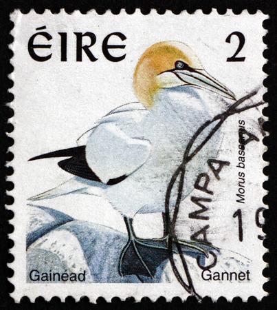 seabird: IRELAND - CIRCA 1997: a stamp printed in Ireland shows Northern Gannet, Morus Bassanus, Seabird, circa 1997 Editorial