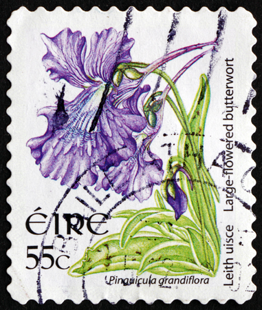 insectivorous plants: IRELAND - CIRCA 2007: a stamp printed in Ireland shows Large-flowered Butterwort, Pinguicola Grandiflora, Carnivorous Plant, circa 2007