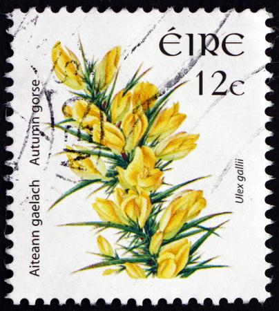 gallii: IRELAND - CIRCA 2006: a stamp printed in Ireland shows Autumn Gorse, Ulex Gallii, Evergreen Shrub, circa 2006