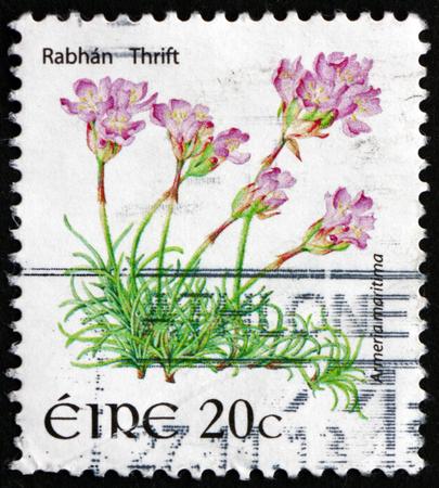 thrift: IRELAND - CIRCA 2008: a stamp printed in Ireland shows Rabhan Thrift, Armeria Maritima, Flowering Plant, circa 2008 Editorial