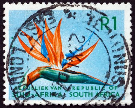 bird of paradise plant: SOUTH AFRICA - CIRCA 1961: a stamp printed in South Africa shows Bird of Paradise, Strelitzia Reginae, Flowering Plant, circa 1961