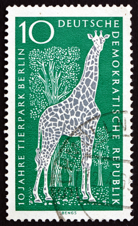 giraffa camelopardalis: GERMANY - CIRCA 1965: a stamp printed in Germany shows Giraffe, Giraffa Camelopardalis, Mammal, 10th Anniversary of Berlin Zoo, circa 1965 Editorial