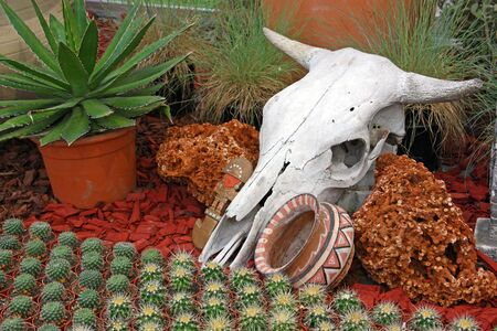 cow skull: Cow skull as a decorative element in the garden Stock Photo