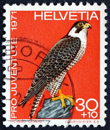 falco peregrinus: SWITZERLAND - CIRCA 1971: a stamp printed in the Switzerland shows Peregrine Falcon, Falco Peregrinus, Bird of Prey, circa 1971