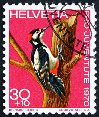 dendrocopos: SWITZERLAND - CIRCA 1970: a stamp printed in the Switzerland shows Greater Spotted Woodpecker, Dendrocopos Major, Bird, circa 1970