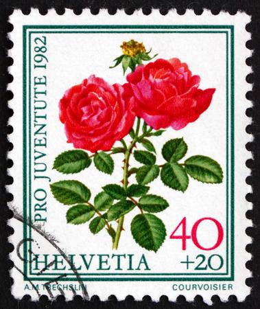 hugh: SWITZERLAND - CIRCA 1982: a stamp printed in the Switzerland shows Hugh Dickson, Famous Rose, Flower, circa 1982