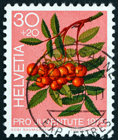 aucuparia: SWITZERLAND - CIRCA 1975: a stamp printed in the Switzerland shows Mountain Ash Berries, Sorbus Aucuparia, Forest Plant, circa 1975